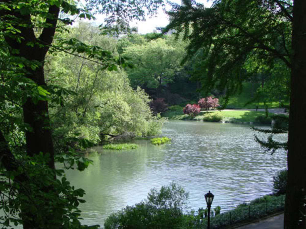 Poem About Central Park New York City