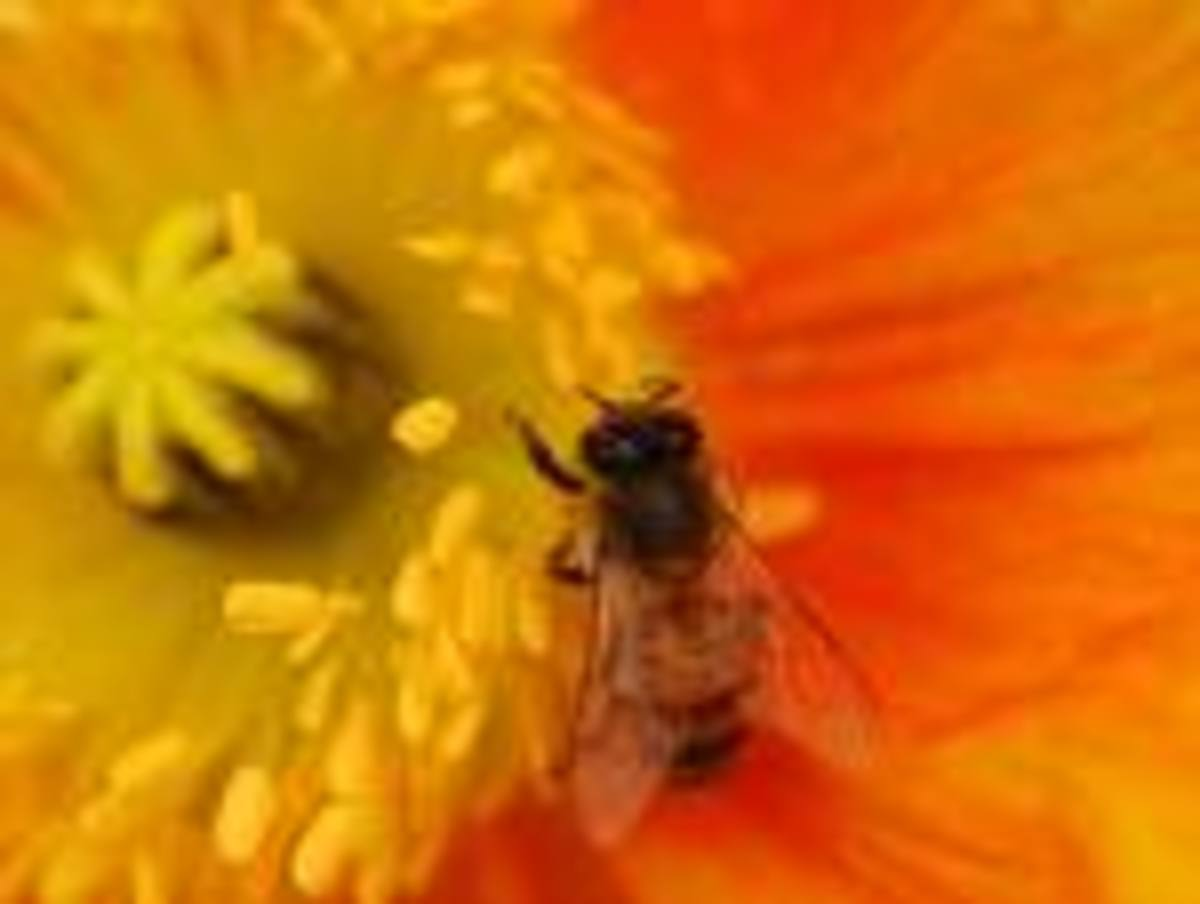 Bee Propolis's Amazing Antimicrobial properties