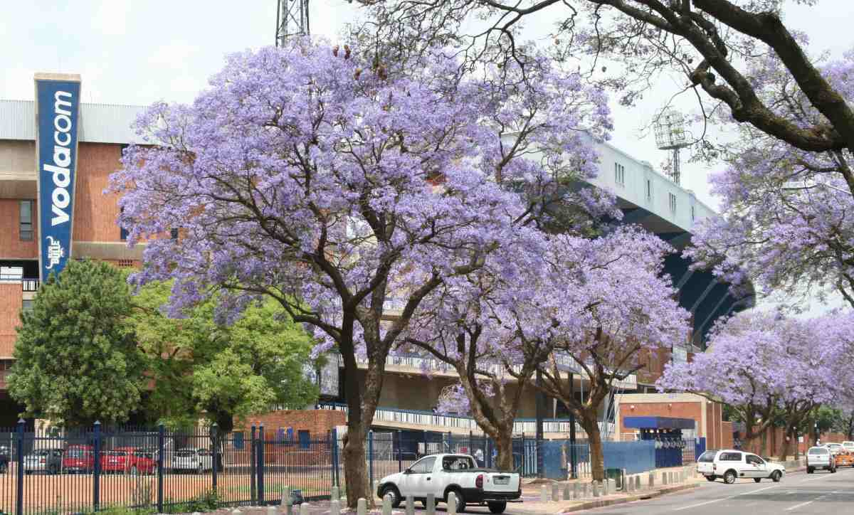 Sports capital - Loftus Versfeld rugby stadium, home of the Blue Bulls Rugby club and match venue for the 2010 Fifa World Cup