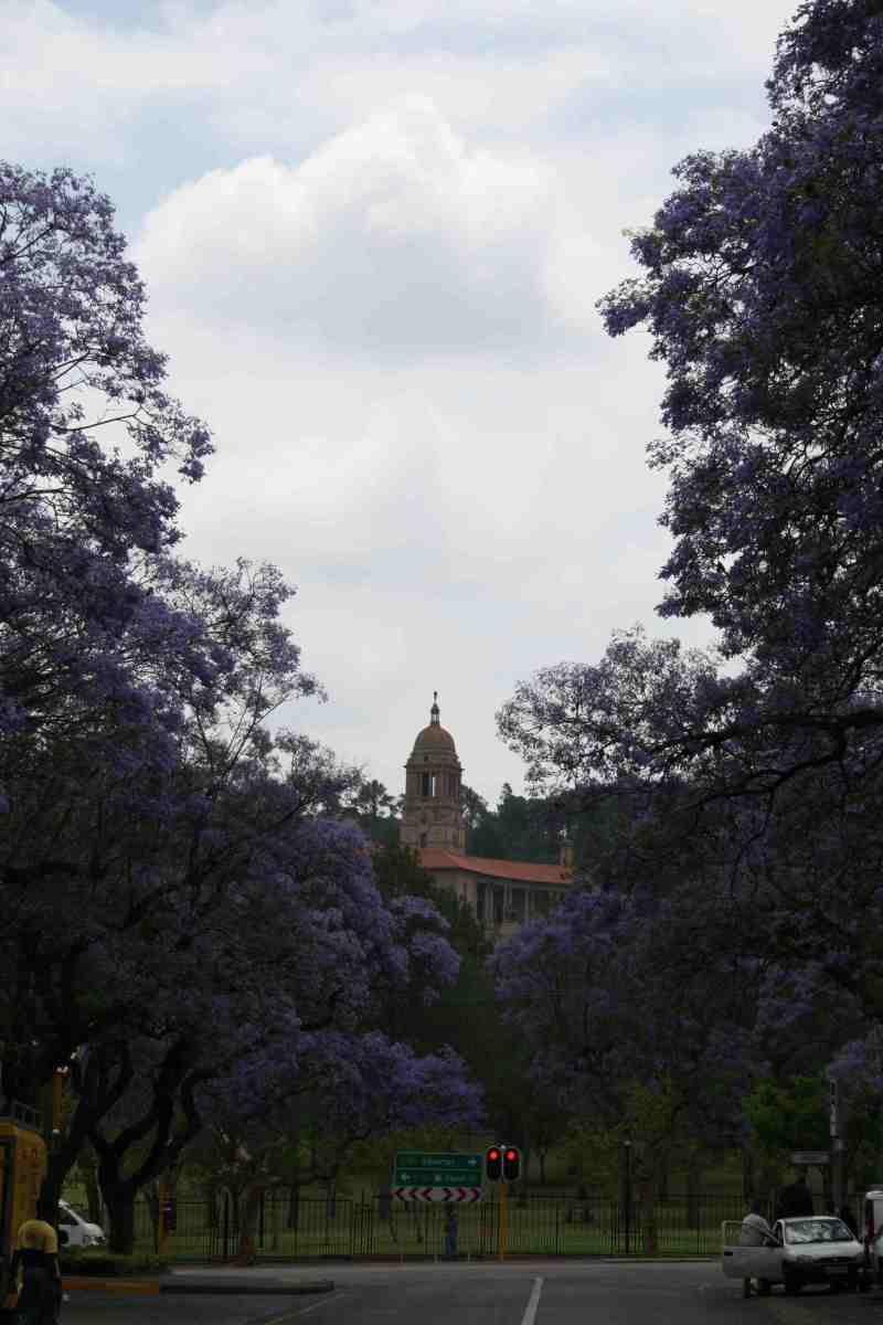 A tower of that other icon of Pretoria, the Union Buildings, peeps out from behind the jacarandas
