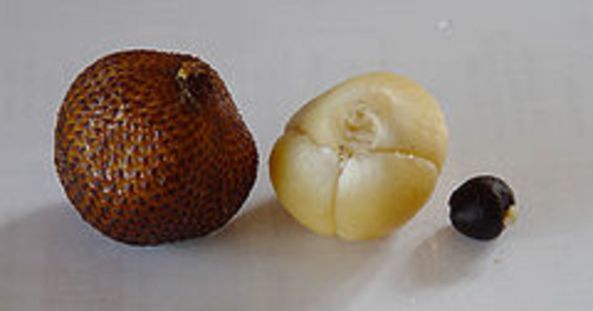 Salak (credit: Wikipedia)