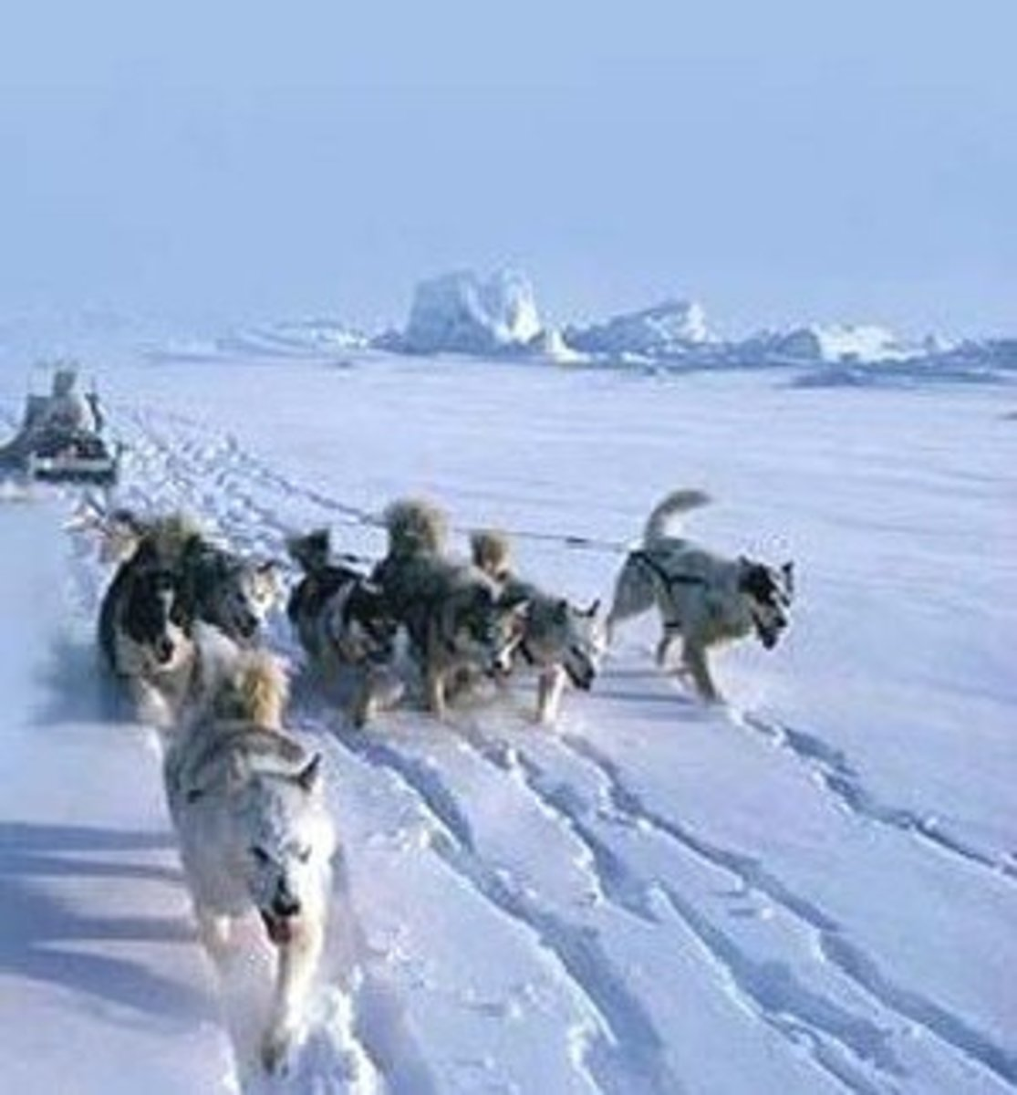 Eastern Arctic hitch - the fan shaped array of dogs is made possible by the lack of trees.