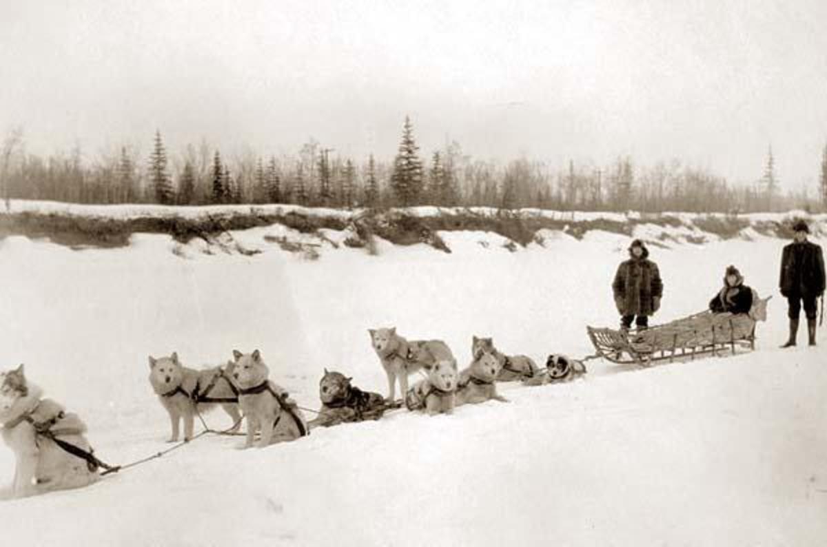 Eco-friendly Arctic Travel - Dog Sledding