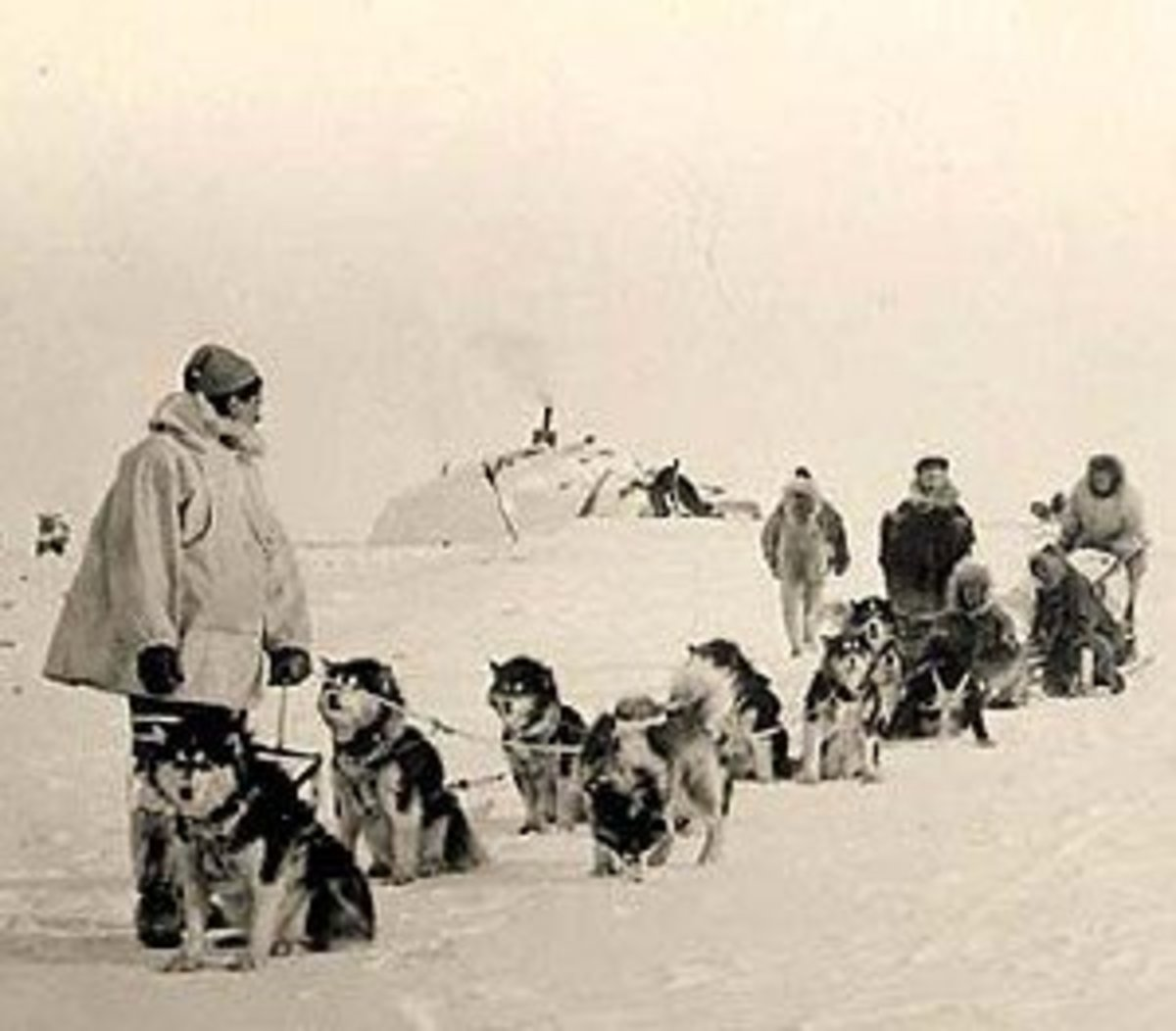 Team of Malamutes from Alaska circa 1950s