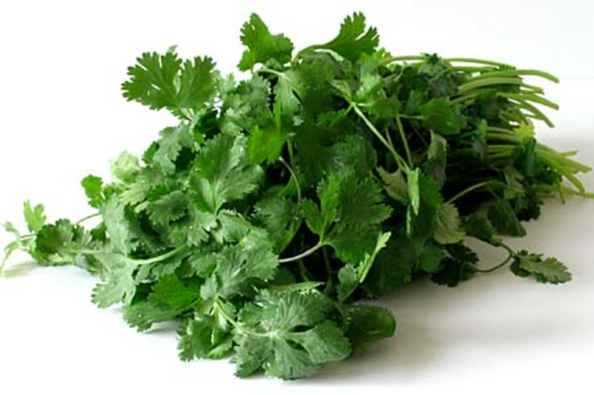 Cilantro looks like Parsley but a quick smell will set you straight.