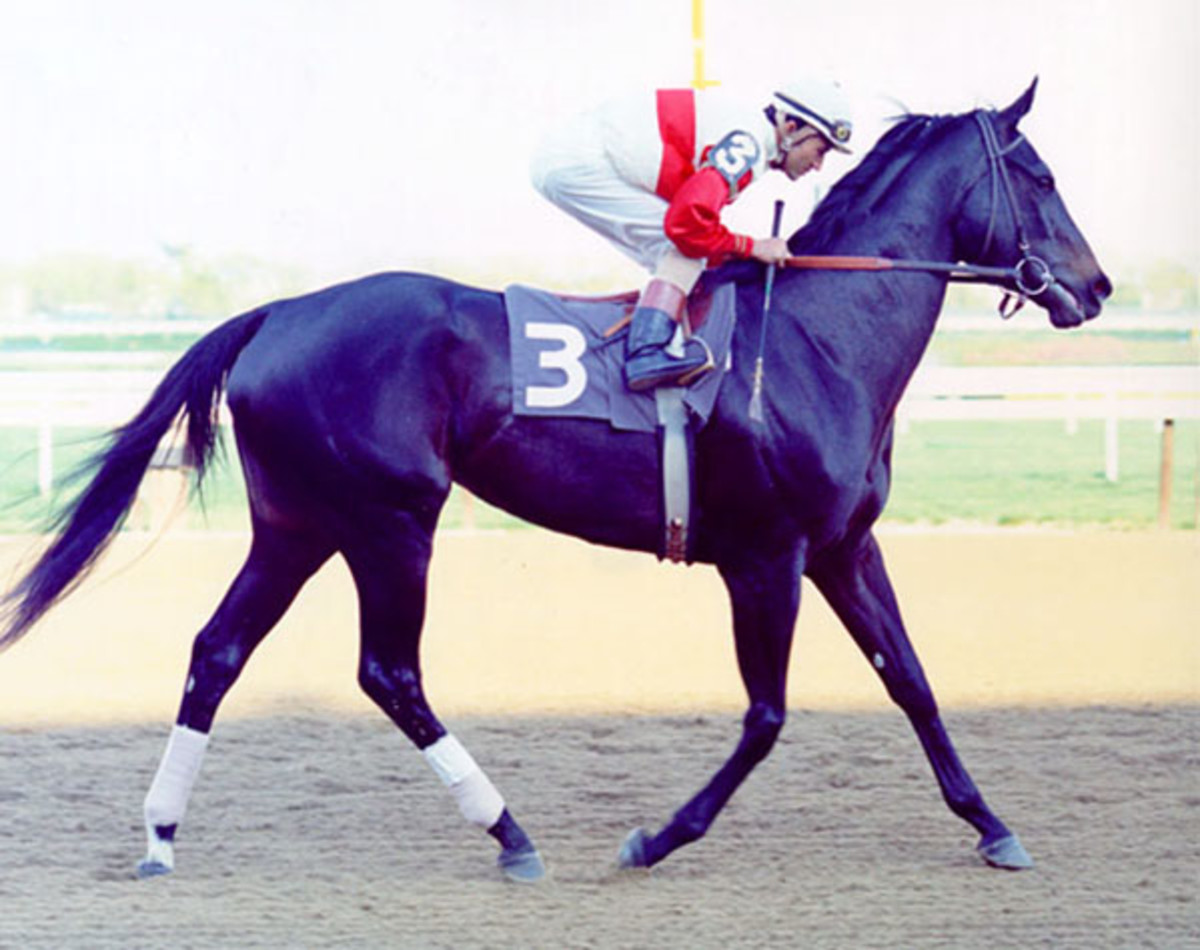 great-racehorse-ruffian-the-queen-of-the-fillies