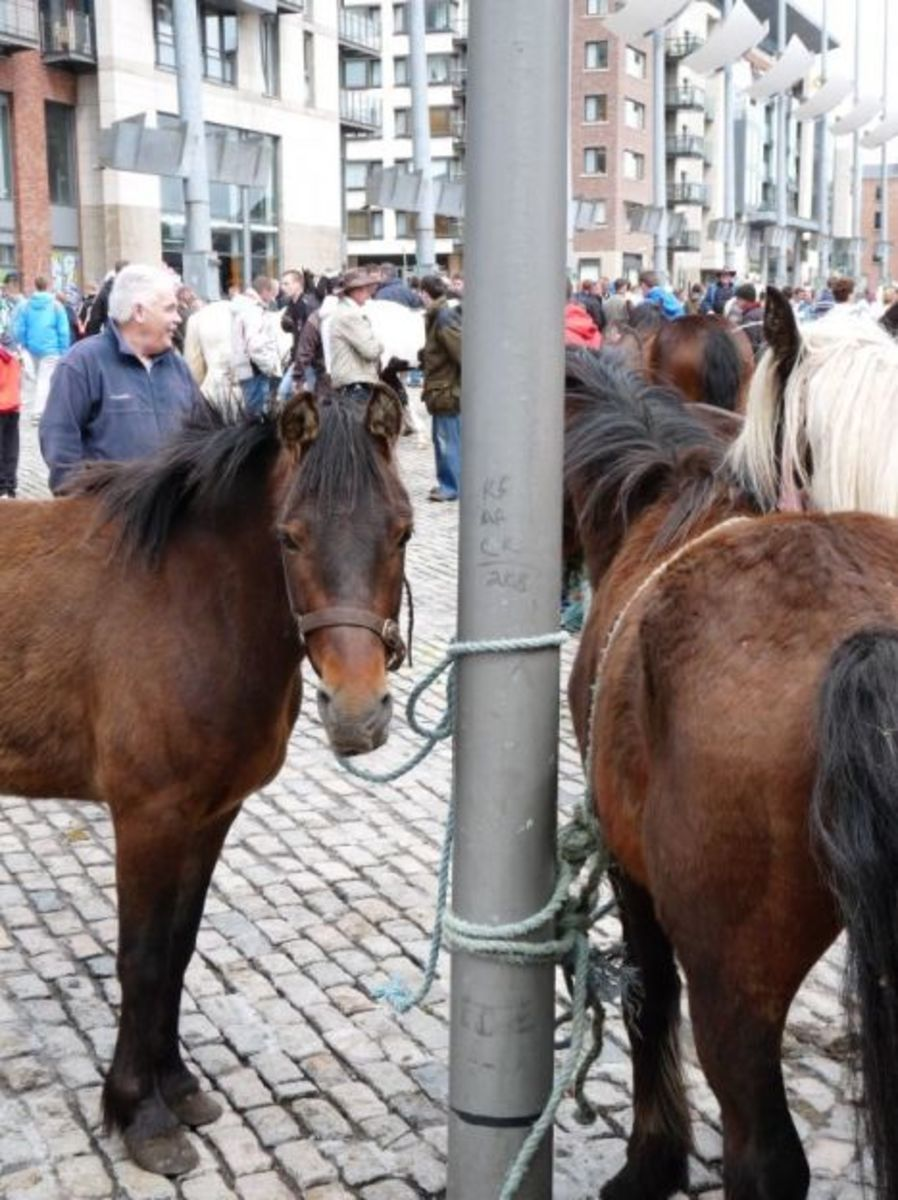 smithfield-horse-market-dublin