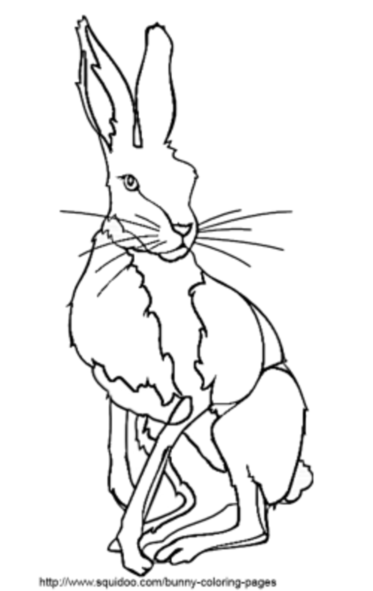 hare coloring pages