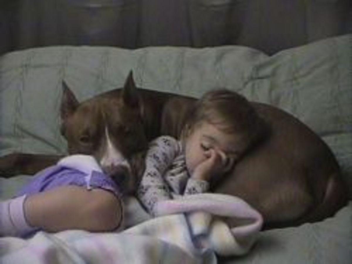 do pit bulls make good pets essay 16-7-2018 do pit bulls make good pets - find out more explanation for : 'do pit bulls make good pets' only from this channel information source: google.