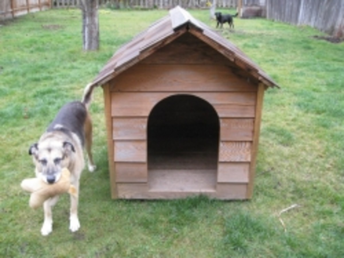 Homemade Dog House