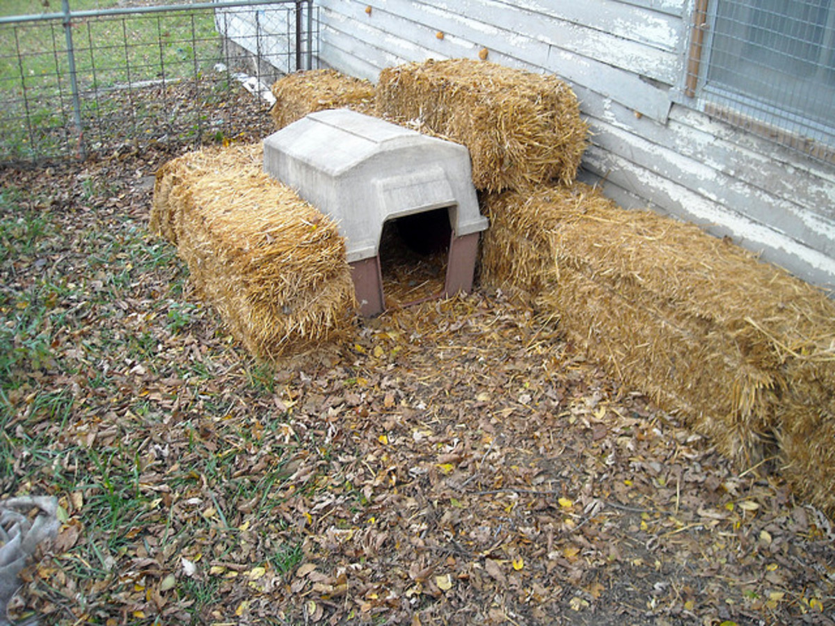 Bales of straw work really well to add extra insulation to your dog's house during the cold, winter months.