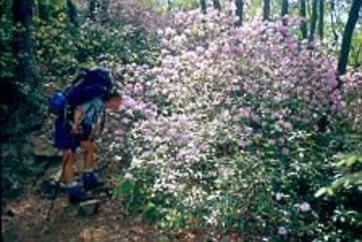Summer on the Appalachian Trail