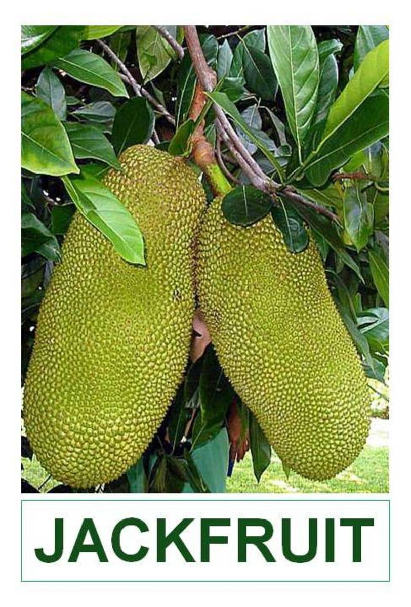 Information about Jackfruit