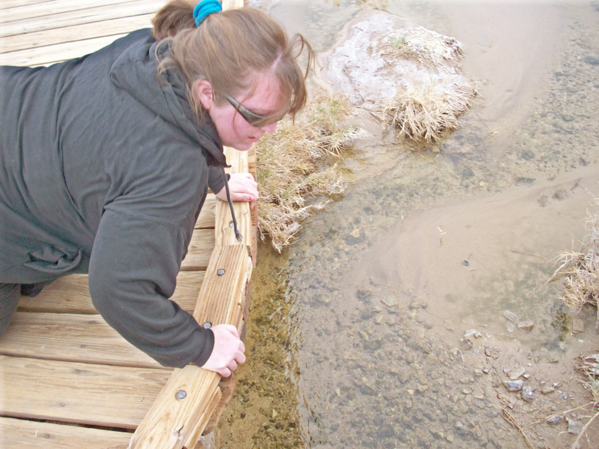 Looking for fish in Death Valley National Park