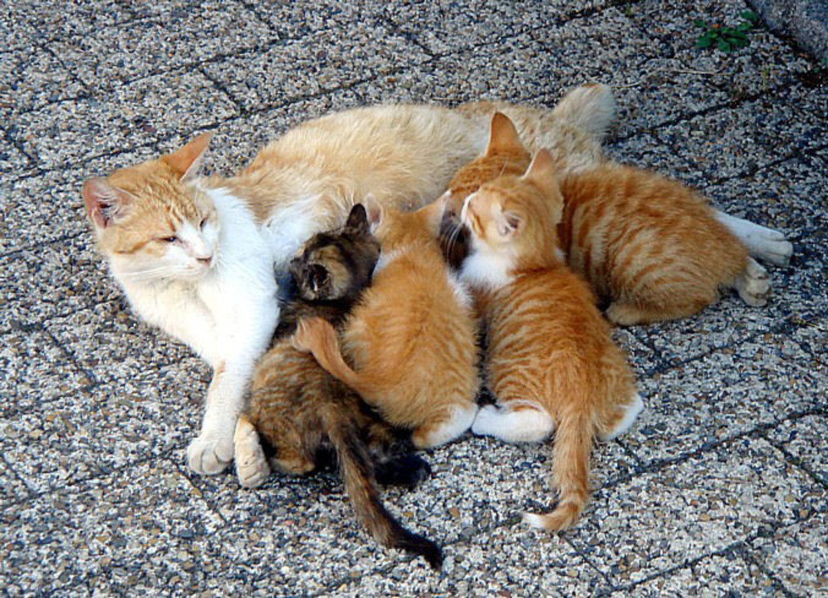 A female cat and her offspring can produce as many as 420,000 cats in as little as seven years.