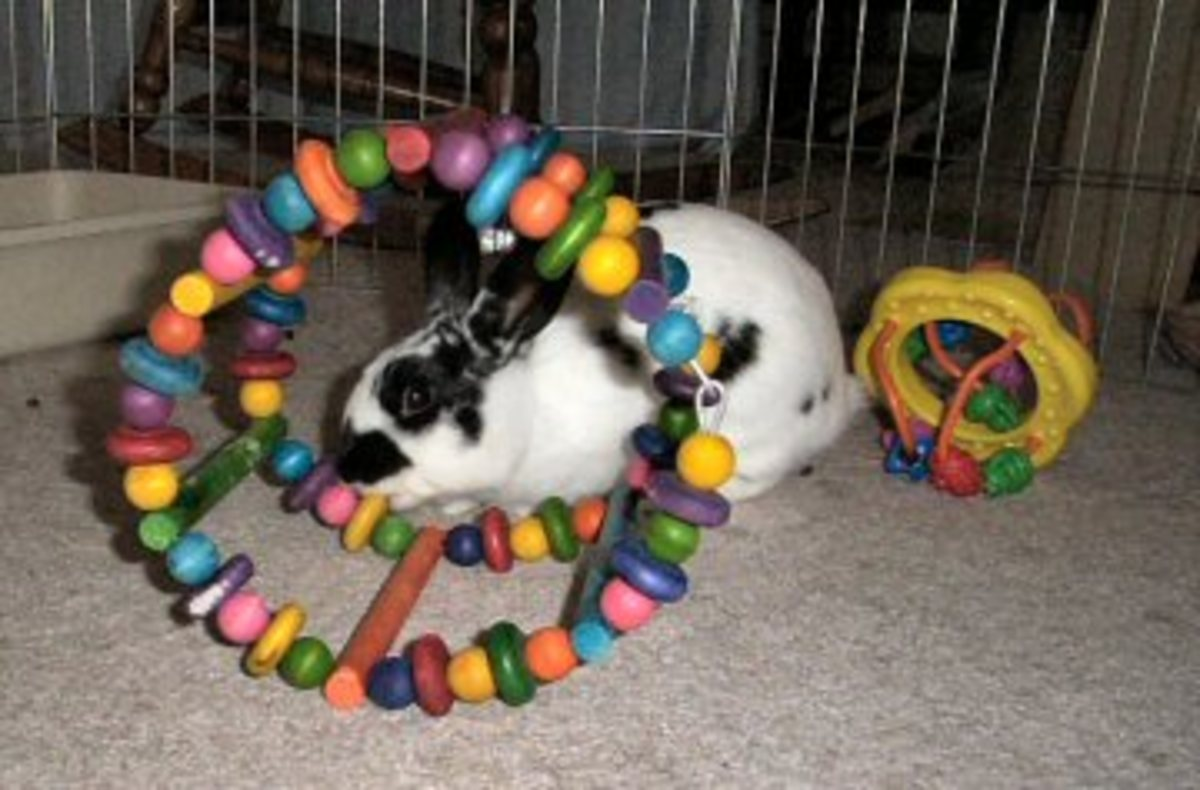 A bunny playing with toys. Image from: http://www.mnhouserabbit.org