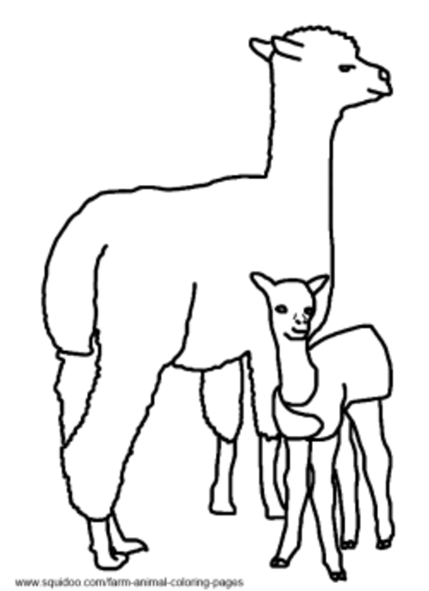 Alpaca Coloring Pages