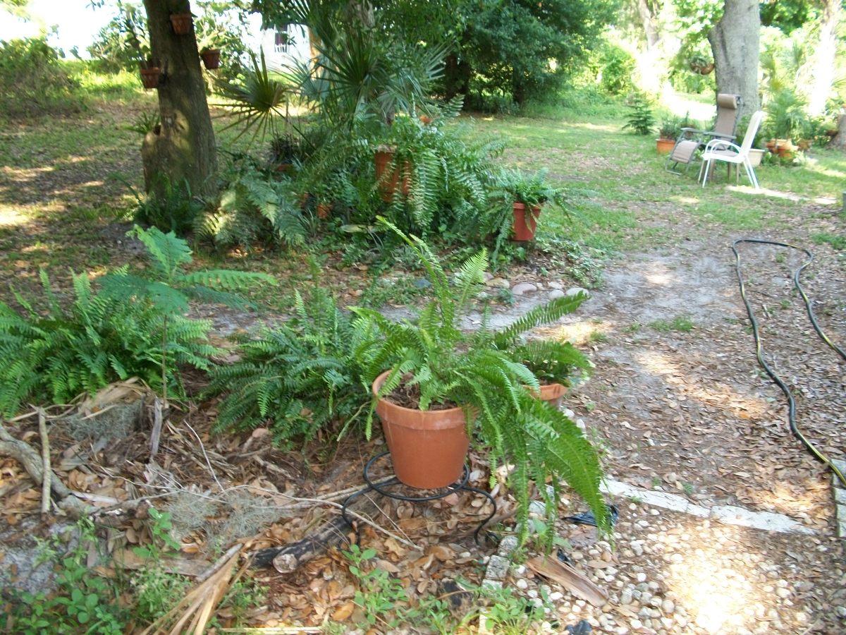 my-florida-garden-in-spring