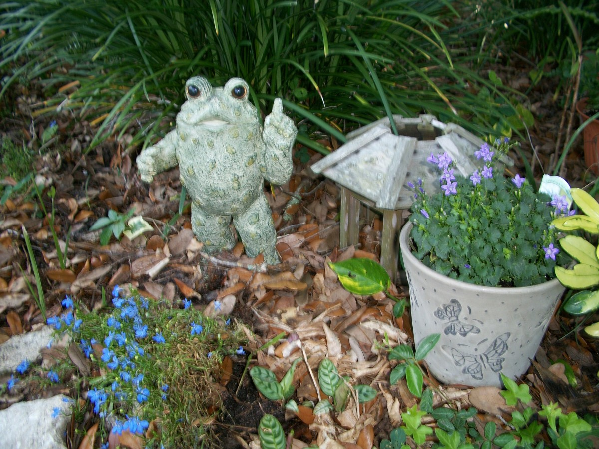 The filibustering toad still holds a place of honor under the two spreading oak trees that shelter this end of the garden. Normally, he would be in the garage by now, and I'd be on the road heading north.
