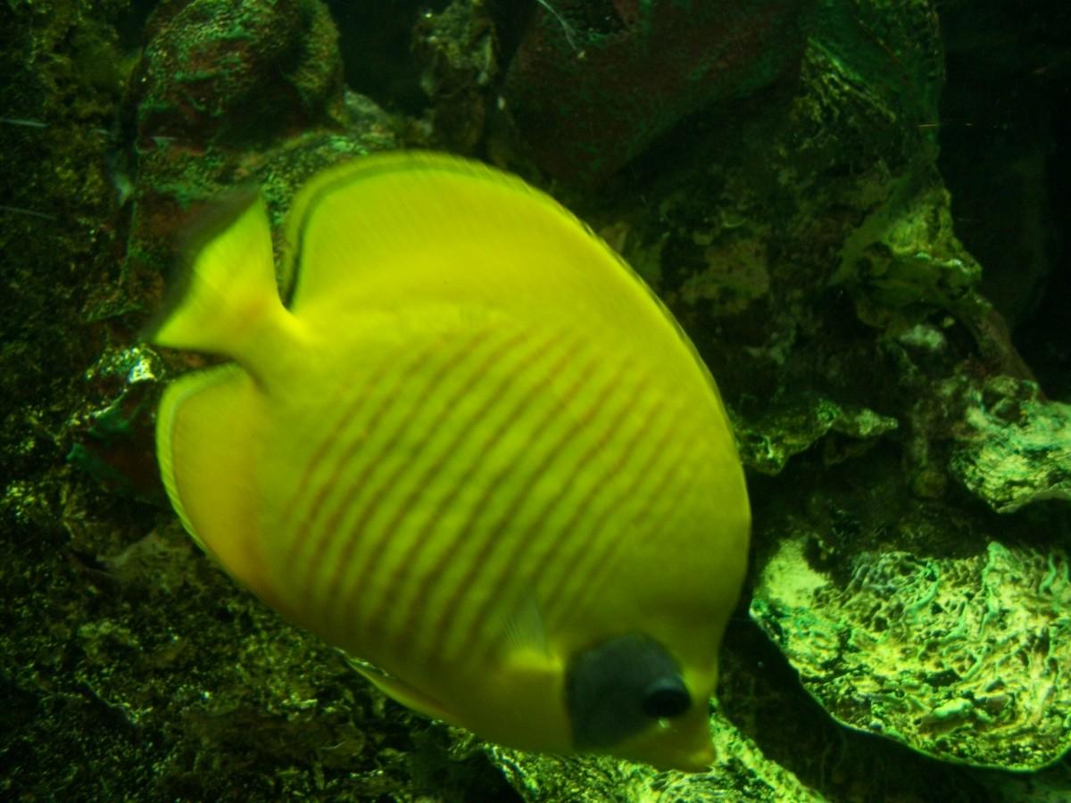 Coney Island Aquarium in Brooklyn, New York