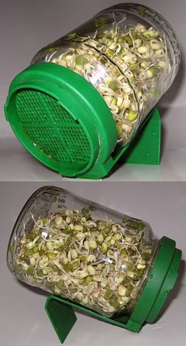 Culinary Techniques: Bean Sprouts - How to Grow Your Own Bean Sprouts