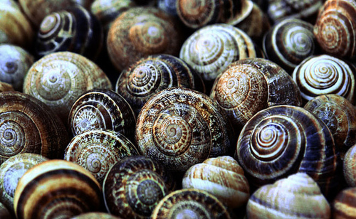 Raising Snails for Food or Pets