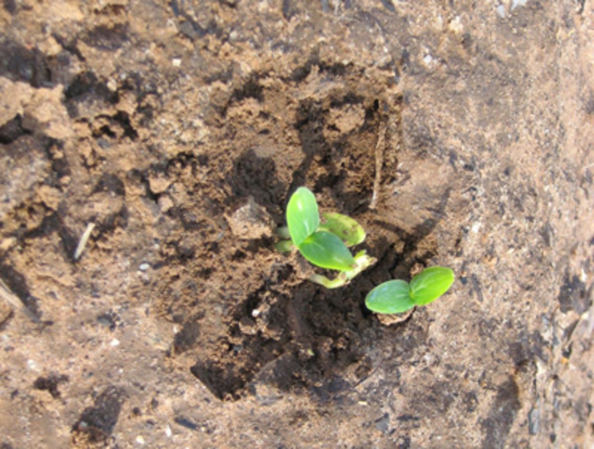 courtesy of http://farm4.static.flickr.com/3281/2428984134_8bb682c25e.jpg