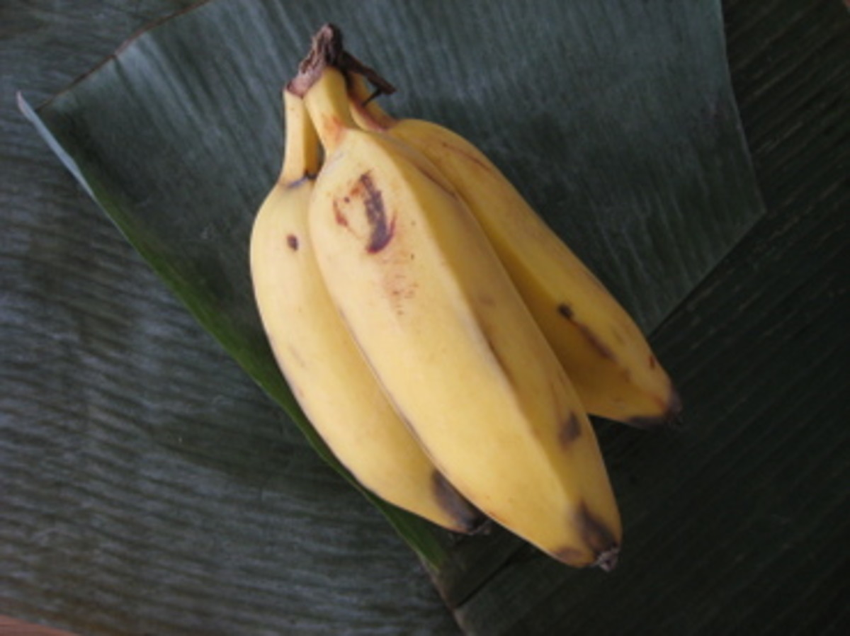 banana variety saba can be fried or boiled as snacks