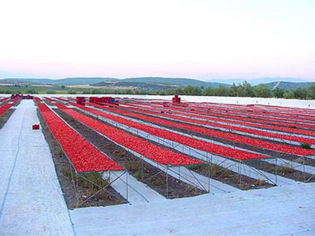 sun-dried-tomatoes-al-auto