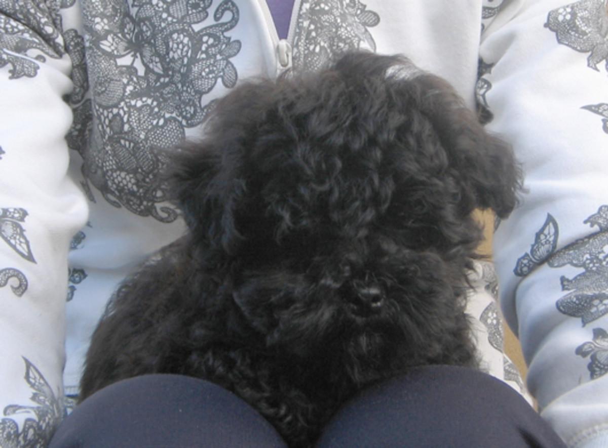 Oliver having a cuddle