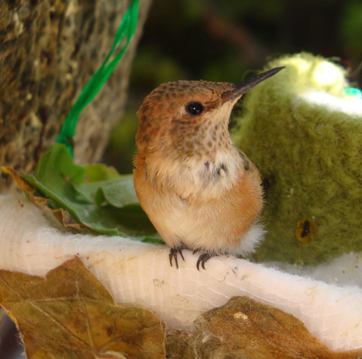 a-home-for-hummingbirds