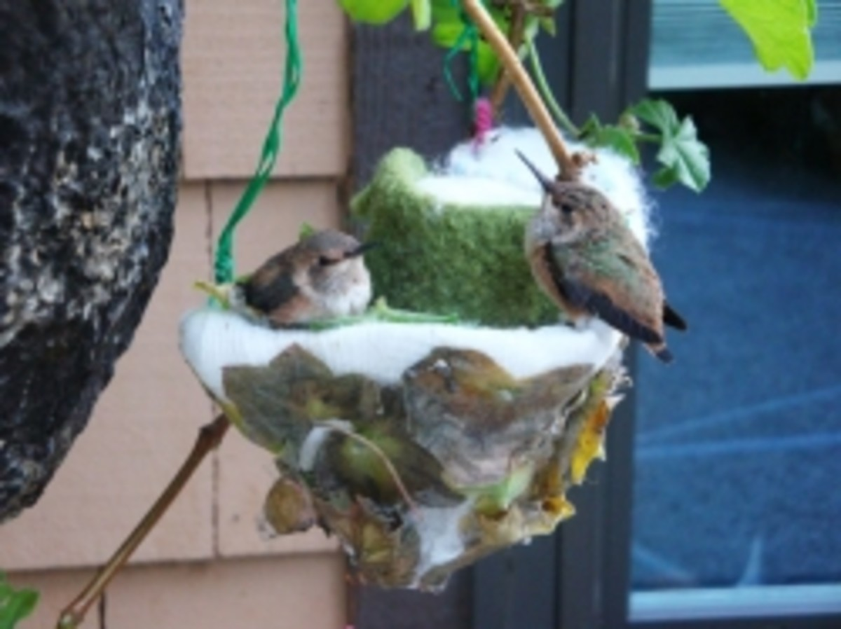 A Home for Hummingbirds