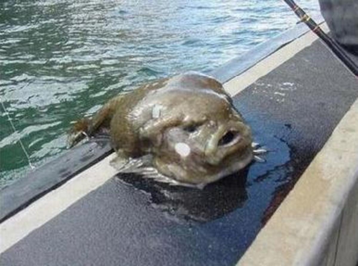 Real Sea Monsters