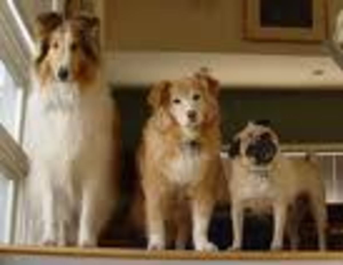 Dogology: Why are Dogs so Different in Shapes Sizes and Types?