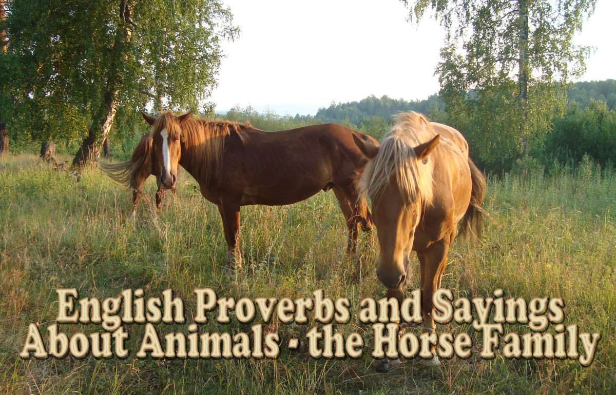 English Proverbs and Sayings About Animals - Equines (the Horse Family)