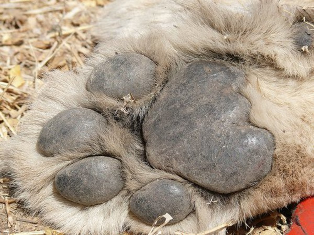 Declawing Tigers and Lions