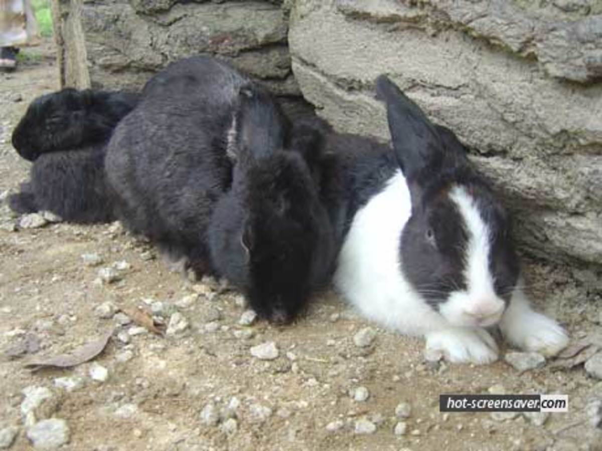 Rabbits can make new friends, but it depends on temperament and that special something that makes a friendship grow.