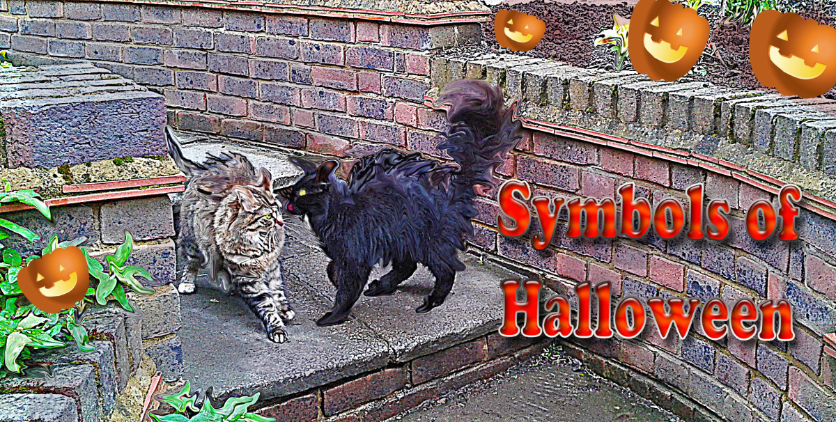 A Fearsome Black Cat Terrorising His Neighbour on Halloween--Bad Cat--His Witchy Owner Ought To Keep Him Under Control.