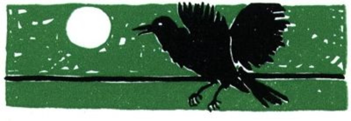 The Raven - Bird of Mystery and Magic