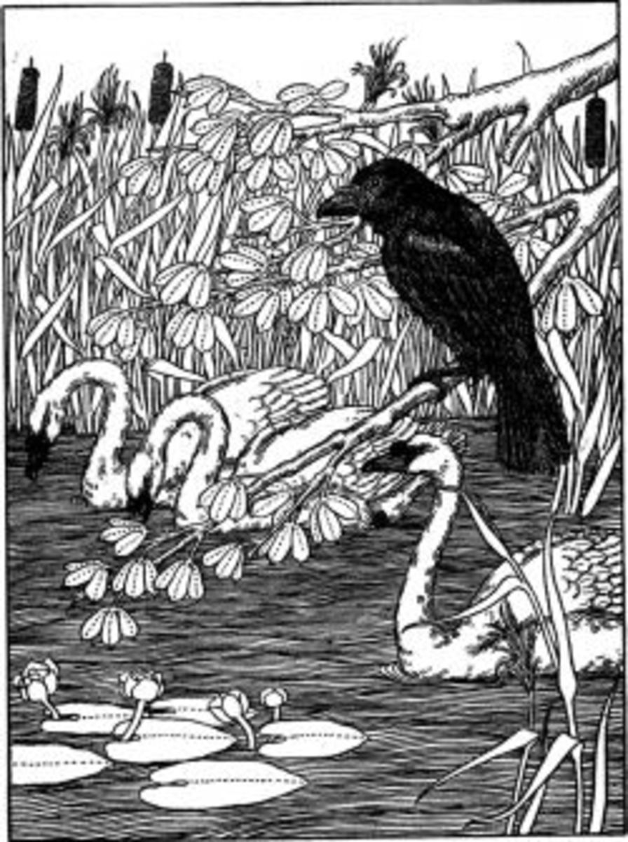 Raven and Swans