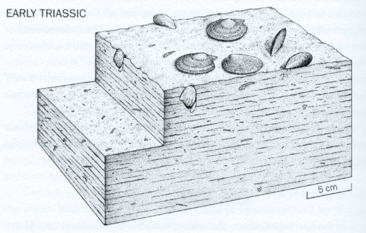 Artist's rendering of ocean life in the early Triassic, shortly after the Permian-Triassic extinction event.