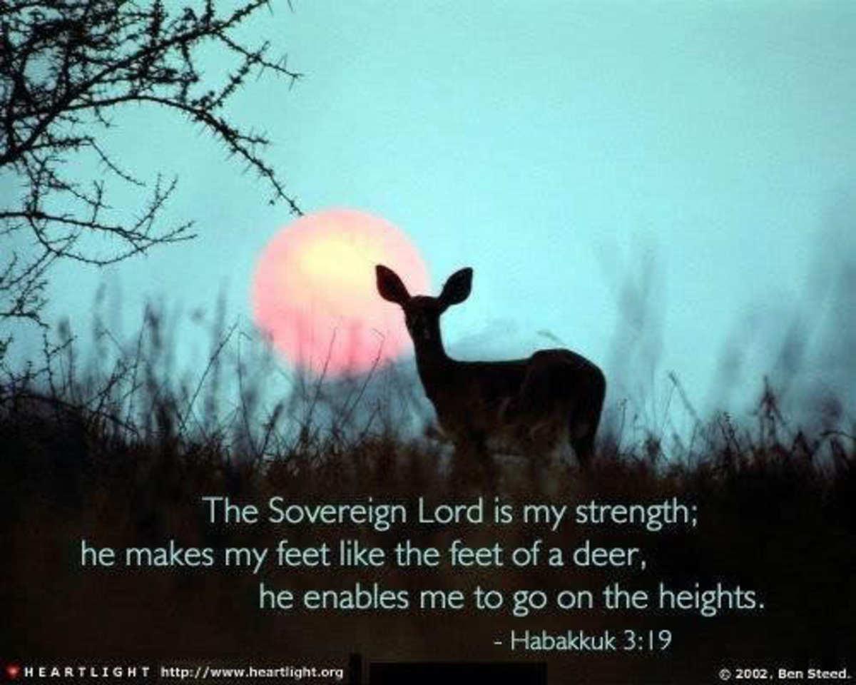yet-will-i-praise-him