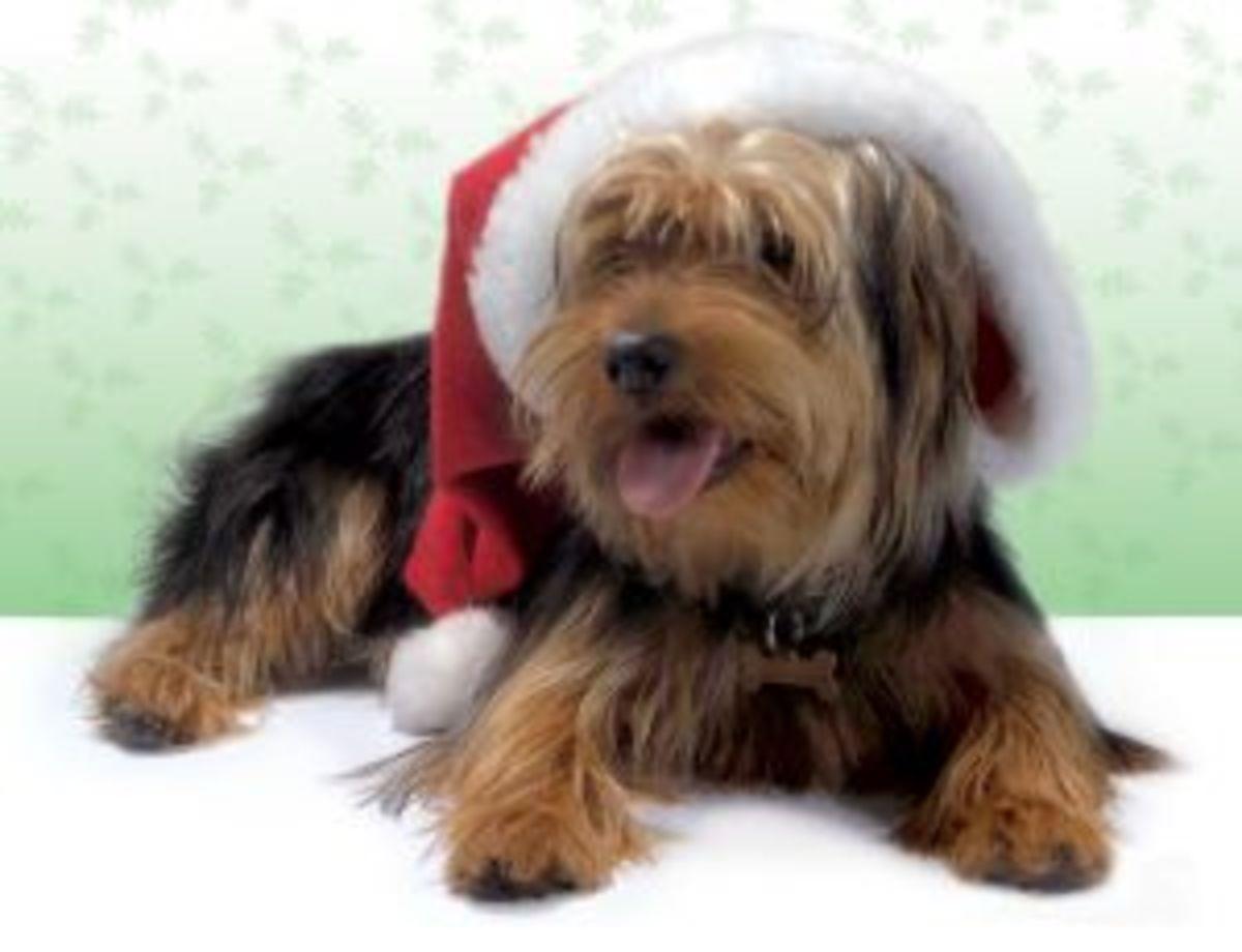 Dog in a Santa Hat - Smile