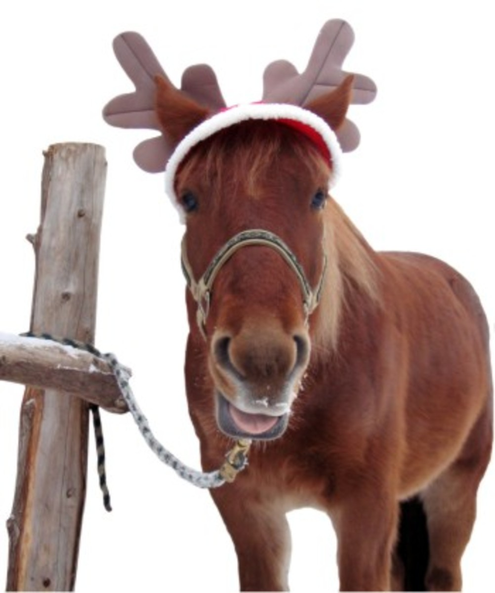 Horse in a Reindeer Hat - Smile