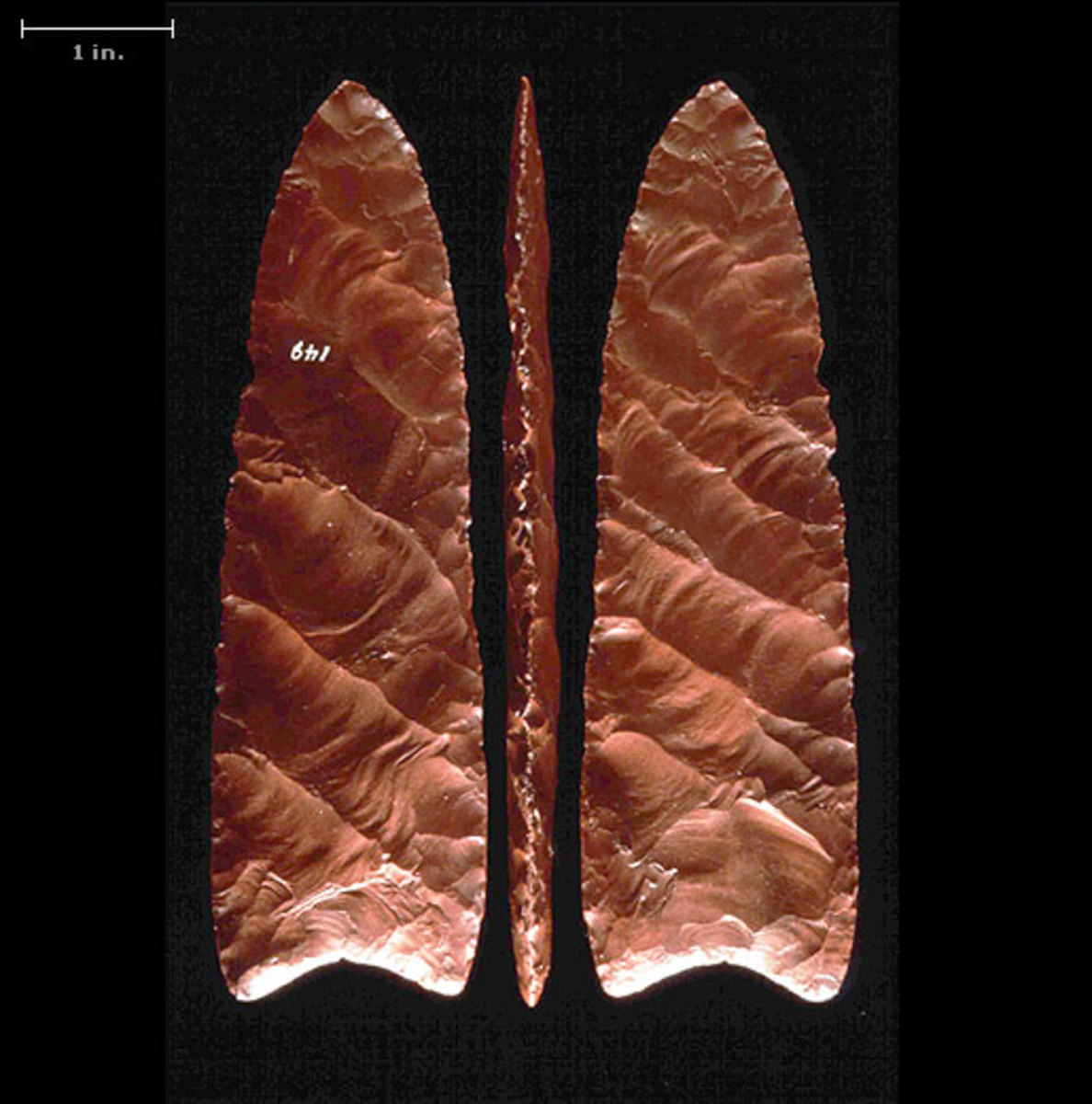 Clovis Points: These Points were strapped to the end of a long stick and used to spear large game animals.