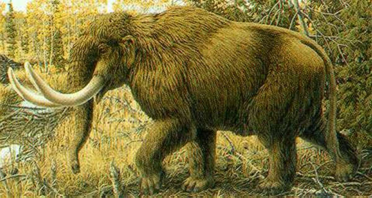 The Mammut, a close kin to the Mammoth.  The Clovis Hunter in Oklahoma used these and other Big Game animals to Sustain their Way of Life.