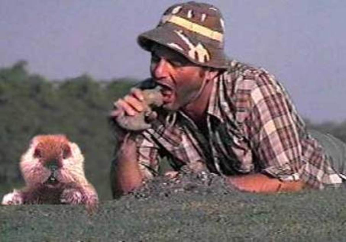 Bill Murray  taunting the gopher in Caddyshack...