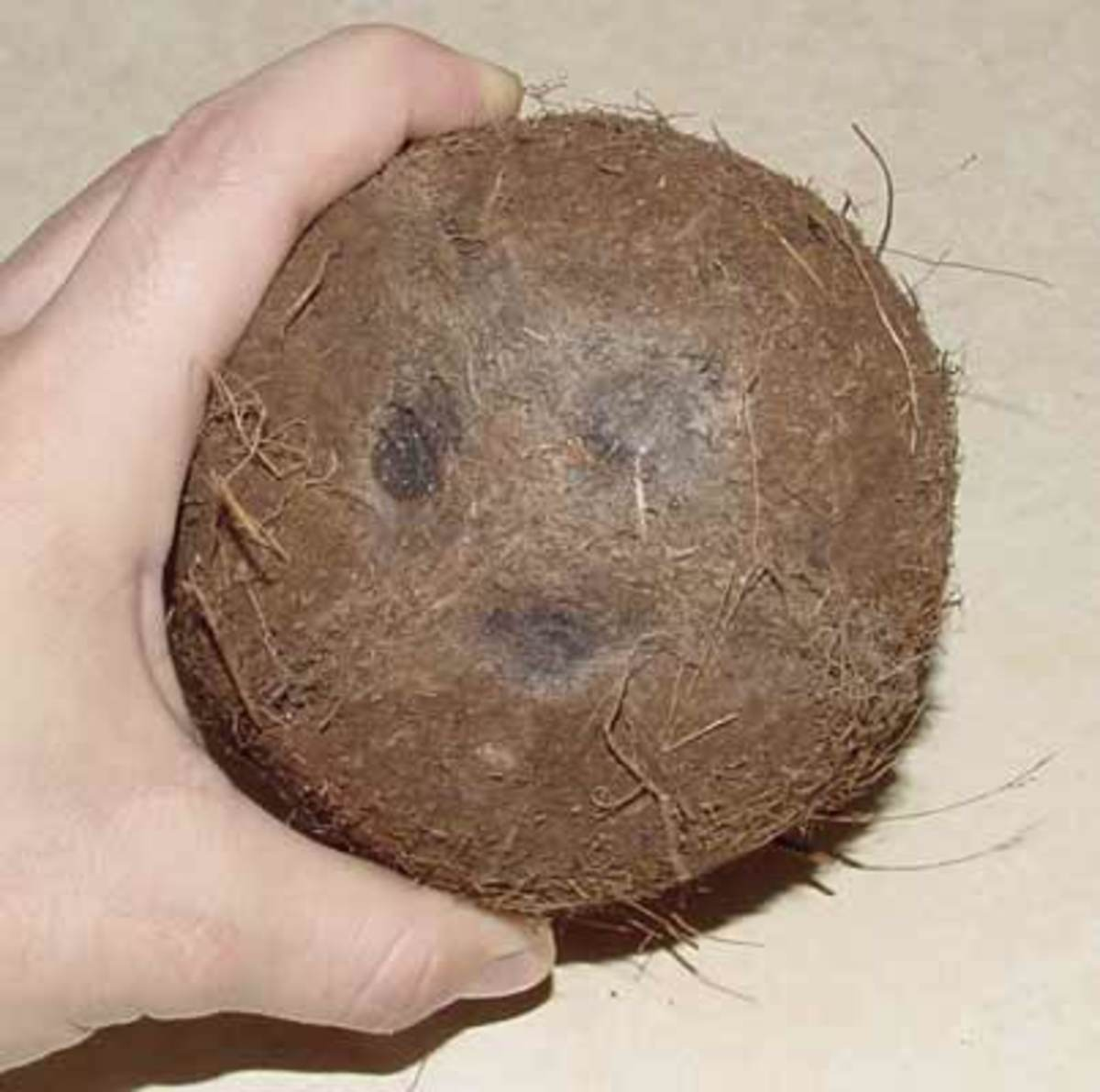Coco- nut