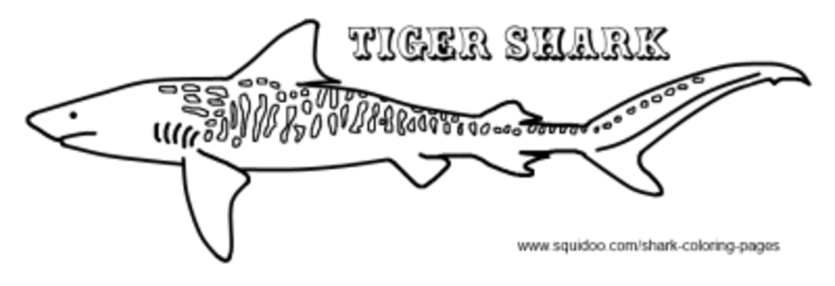 printable tiger shark coloring pages - photo#26