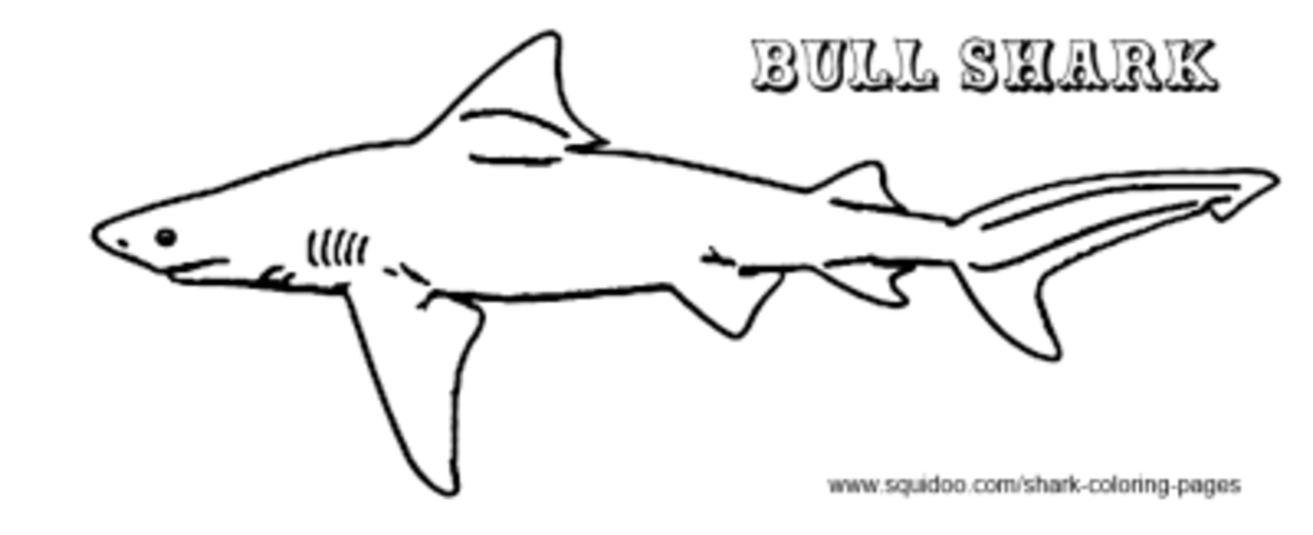 blue shark coloring pages - photo#22